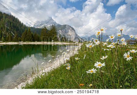 Daisies Near Ehrwalder Almsee - Beautiful Mountain Lake In The Alps, Tyrol, Austria.