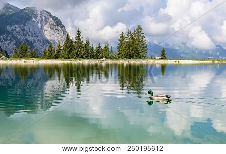 Duck In Ehrwalder Almsee - Beautiful Mountain Lake In The Alps, Tyrol, Austria. Sky Reflects In The