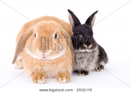 Two Bunny On A White Background