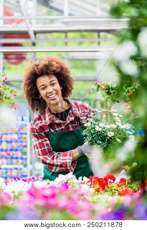 Portrait of a dedicated female florist smiling with professional satisfaction while holding a beautiful potted daisy flower plant for sale in a modern shop