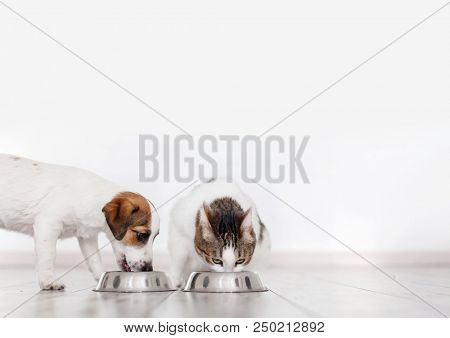 Dog and cat eating food. Puppy eating dogs food. Pets at home
