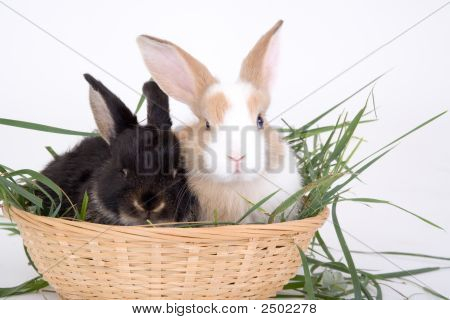 two bunny in a basket full off grass poster