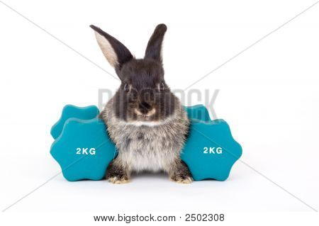 Black Bunny And A Weight Isotated On White