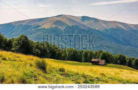 Abandoned Sheep Herd Shed On Hillside. Forest Behind The Grassy Meadow. Lovely Countryside Landscape