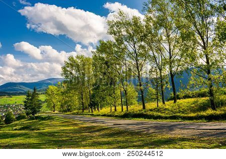 Row Of Trees Along The Road In To The Mountains. Lovely Autumnal Landscape