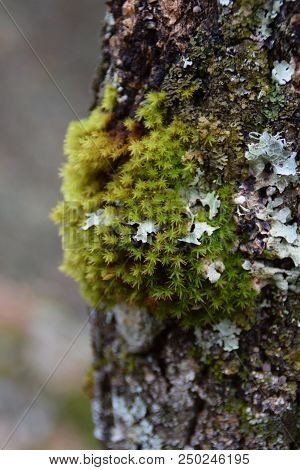 Starry Green Moss Perched On Old Tree