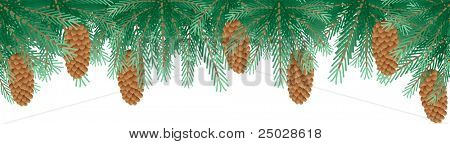 vector christmas background - Pine branches with cone