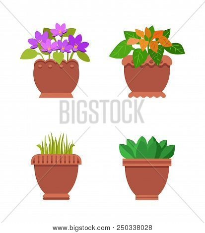 Room Plants In Brown Pots With Leaves, Collection Snake Flower And Adriatic Bell-flower, Avage Ameri