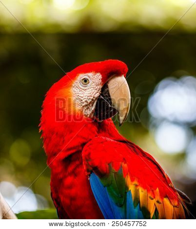 Scarlet Macaw In A Natural Park In Cartagena, Colombia