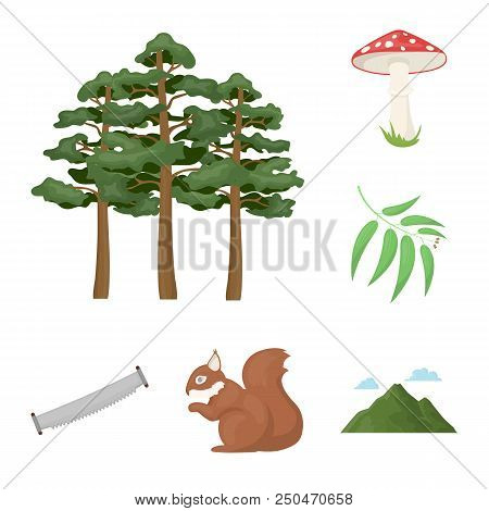 Forest And Nature Cartoon Icons In Set Collection For Design. Forest Life Vector Symbol Stock  Illus
