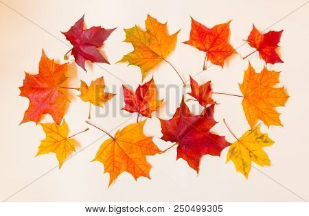 Collection Of Autumn Maple Leaves On Pastel Background
