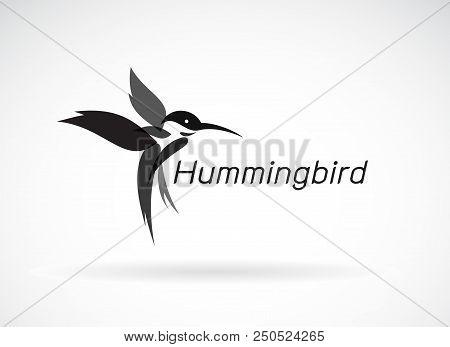 Vector Of Hummingbird Design On White Background., Wild Animals. Birds Icon., Easy Editable Layered