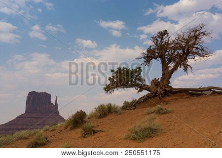 lonesome old tree in Monument Valley in the southern Utah desert poster