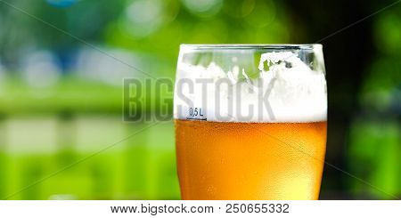 Beer In A Glass Glass Glass, Bubbles Rise. On The Background Of Green Foliage Glass With Golden Drop