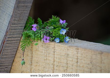 Blue And Pink Forget-me-nots Lie On A Wooden Background
