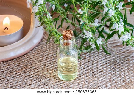 A Bottle Of Mountain Savory Essential Oil With Fresh Blooming Satureja Montana Plant And An Aroma La