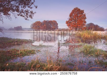 Autumn Nature Landscape. Colored Trees On River Shore In The Clear Morning. Scenic Nature In October