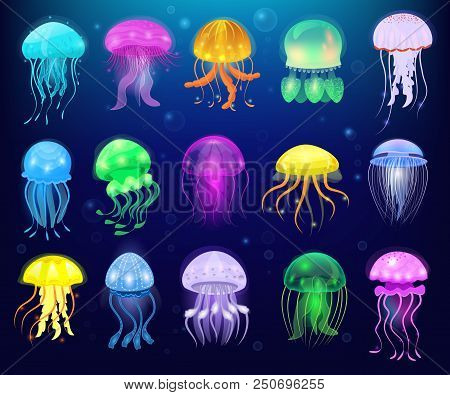 Jellyfish Vector Ocean Jelly-fish Or Sea-jelly And Underwater Nettle-fish Or Medusae Illustration Se