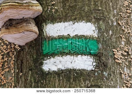 Marking Of The Tourist Route. Tourist Sign On Tree. Czech Tourist Sign On Tree Bark. Mushrooms On Th