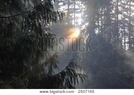 Light Rays Through Dewy Trees