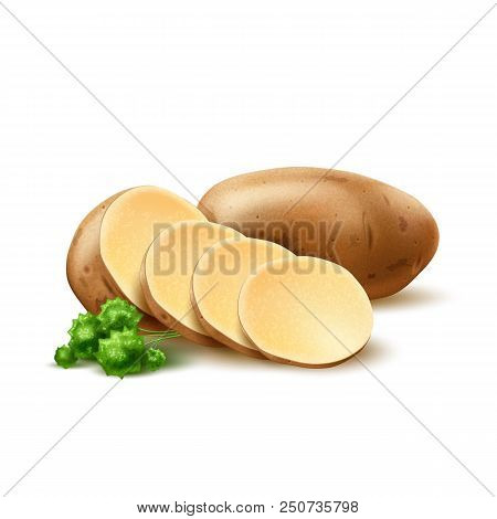 Realistic Raw Potato With Green Leaves Whole And Sliced. Ripe Unpeeled Vegetable Full Of Nutritions
