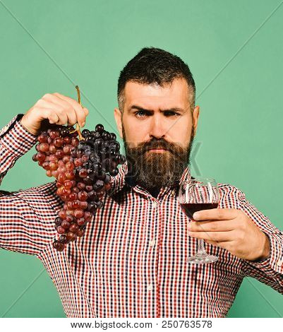 Winegrower With Strict Face Presents Product Made Of Grapes. Man With Beard Holds Bunch Of Grapes An