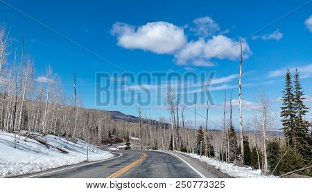 Snow Covered Road Sides and Barren Tall Trees Along a Curvy Road in Southwest Utah poster