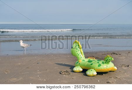 Inflatable Floating Animal Toy And Real Seagull At The Beach. No People