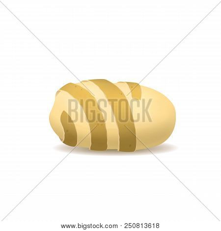Realistic Detailed 3d Potato Twisted Peel Ripe Raw Unpeeled Root Fresh Natural Product. Vector Illus