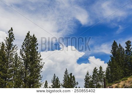 Clouds Float Above Pine Trees On A Summer Day In Featherville, Idaho, Usa.