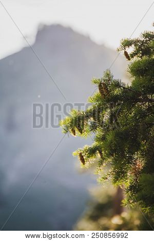 Green Pine Needles And Pinecones Absorb Sunlight With Mountains In The Distance. Sawtooth National F