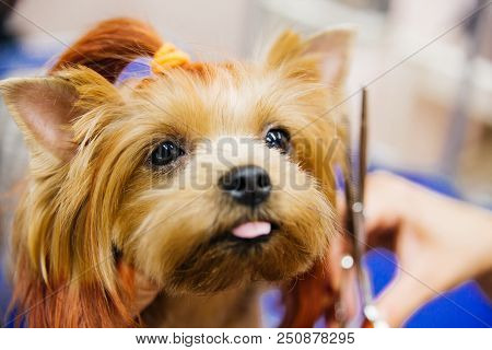 Grooming A Dog In A Hair Salon For Dogs