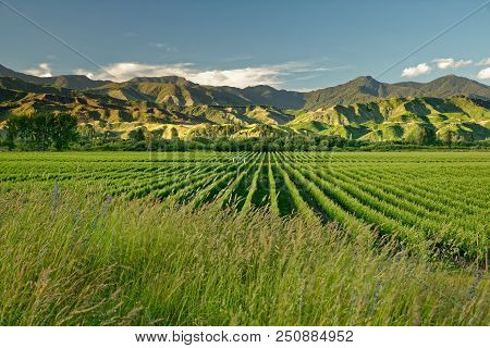Vineyard, Winery New Zealand, Typical Marlborough Landscape With Vineyards And Roads, Hills And Moun