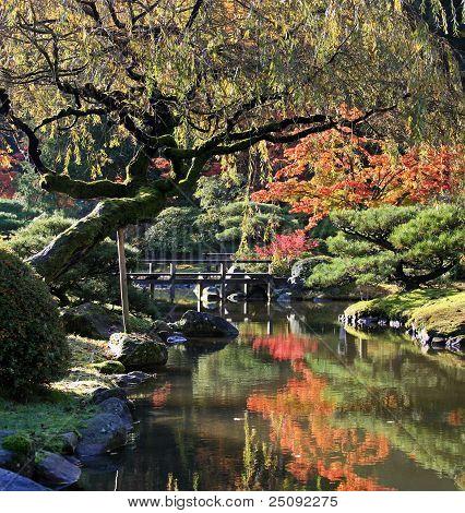 Arboretum, Seattle Japanese Garden #14