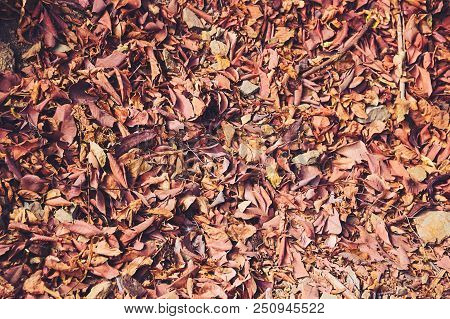 Background Of Orange Fall Leaves Lying On The Ground.