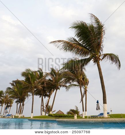 Palmtrees From Swimming Pool