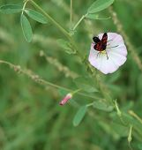 Rustrel, France - July 14, 2018: photography showing a small insect with red speckled on a plant. The photography was taken from the town of Rustrel while hiking in the provencal colorado in the south of France. poster