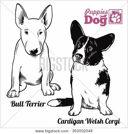 Bull Terrier And Cardigan Welsh Corgi Puppy Sitting. Drawing By Hand, Sketch. Engraving Style, Black