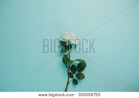 Spring Freshness. White Rose With Green Leaves In The Middle On Blue Background. Single White Rose W