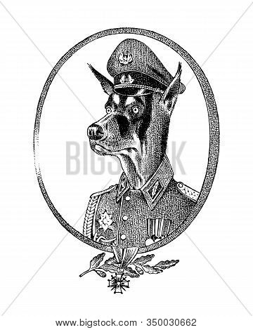 Military Dog Or Dobermann. Animal Character Or Persona. Hand Drawn Portrait. Engraved Monochrome Ske