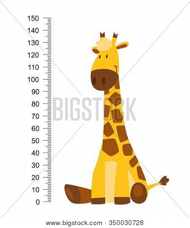 Sitting Cheerful Funny Giraffe With Long Neck. Height Meter Or Meter Wall Or Wall Sticker From 0 To