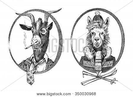 Animal Character. Smoking Goat Student And Alpaca Or Llama Or Guanaco Skier. Hand Drawn Portrait. En