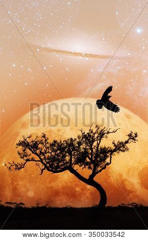 Fiction Novel Book Cover Template - Unreal Landscape Of Lone Tree Silhouette And Flying Bird With Pl