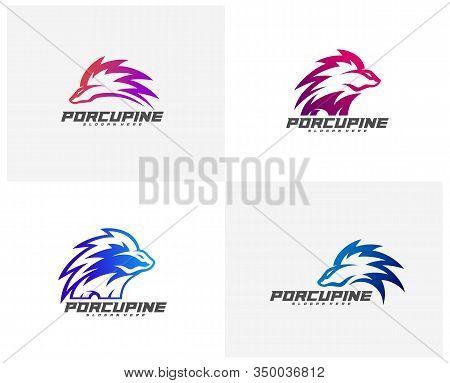 Set Of Modern Porcupine Logo Vector, Illustration