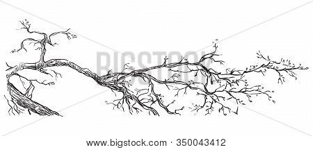 Vector Hand Drawing Realistic Branch Of Tree In Black Color Isolated On White Background. Monochrome