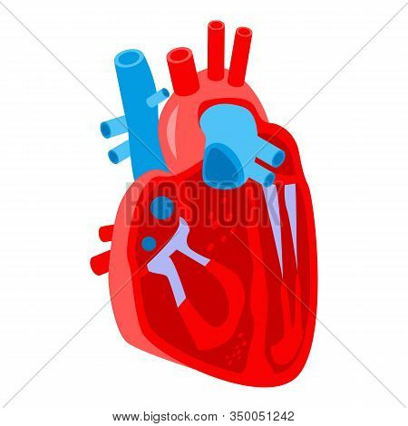 Section Human Heart Icon. Isometric Of Section Human Heart Vector Icon For Web Design Isolated On Wh