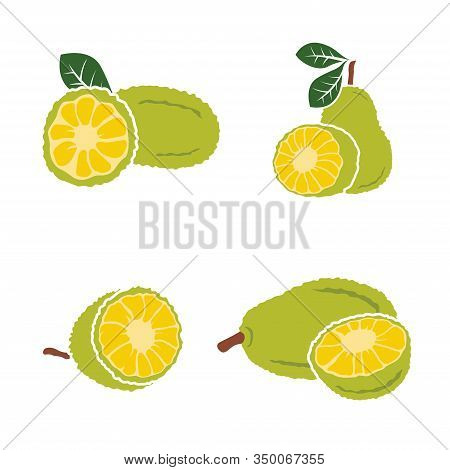 Vector Black Jackfruit Set On White Background