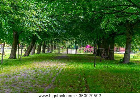 Wide Broadleaf Tree Alley In A Village. The Trees Cover The Complete Width Of The Alley.