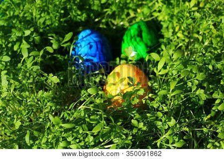 Beautiful Coloured Eastereggs In Cress In The Eastertime