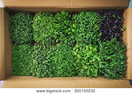Fresh Organic Food - Microgreens In Cardboard Box. Top View
